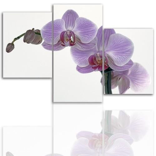 Tryptyk do salonu - Kwiaty, storczyk, orchidea 12098 - 1