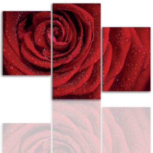 Tryptyk do salonu - Kwiaty, róże, pąk 12108 - 1