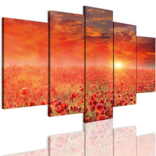 Obrazy 5 częściowe- Kwiaty, maki, polana, zachód słońca 12334 - 1
