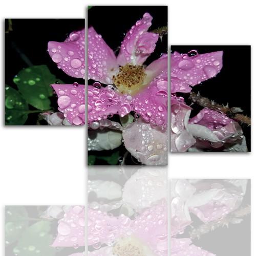 Tryptyk do salonu - Kwiaty, roślina, pąk kwiatu 12106 - 1