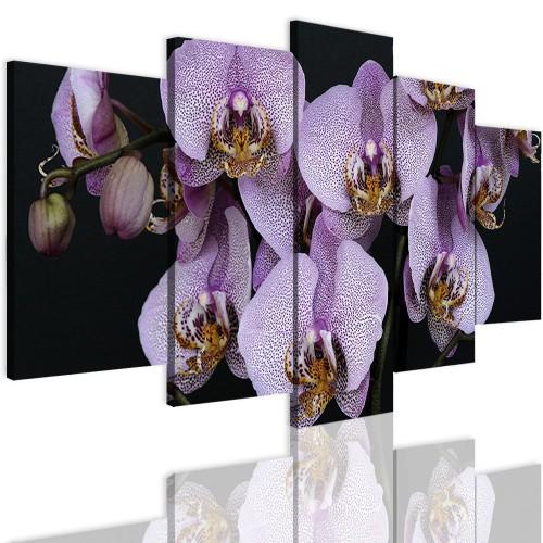 Obrazy 5 częściowe- Kwiaty, storczyki 12324 - 1