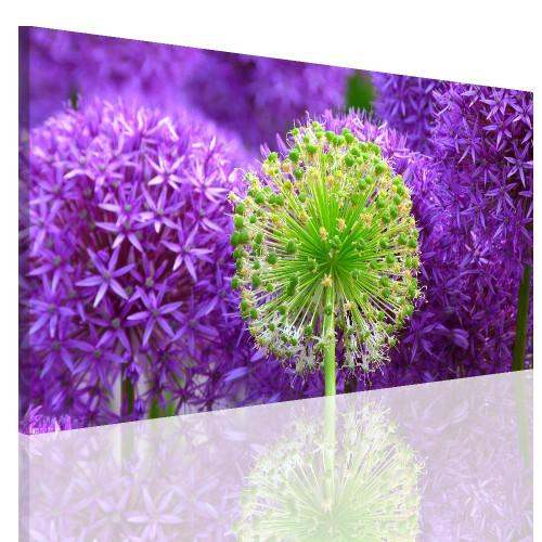 Obraz na ramie płótno canvas- pejzaż, kwiat, łąka 15067 - 1