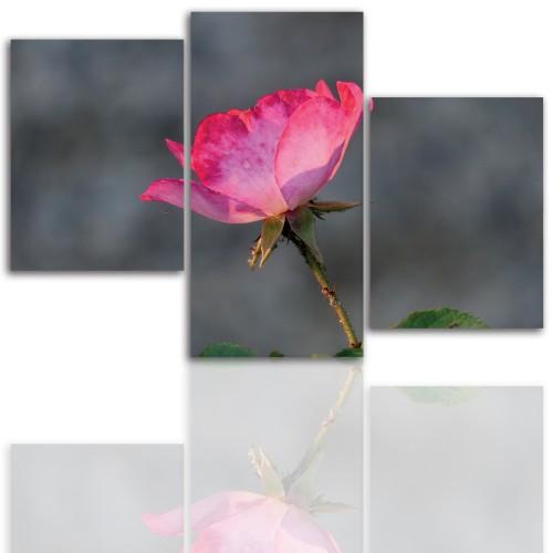 Tryptyk do salonu - Kwiaty, róże, pąk 12104 - 1