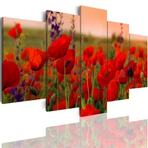 Obrazy 5 częściowe- Łąka kwiaty maki 507 - 1
