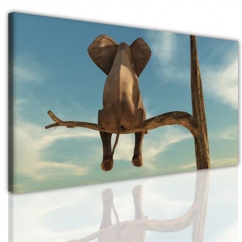 Obraz ścienny canvas na ramie 15164 odpoczywający słoń - 1