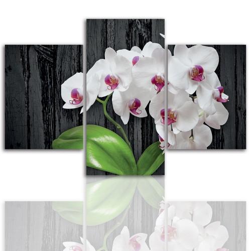 Tryptyk do salonu -  Kwiaty, storczyk, orchidea 12059 - 1