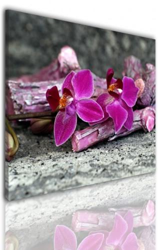 Obrazy jednoczęściowe- Kwiaty, orchidea 524 - 1