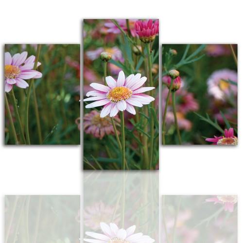 Tryptyk do salonu -  Kwiaty, roślina, stokrotka 12062 - 1