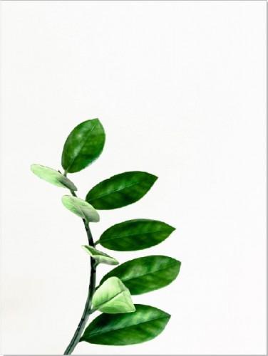 Plakat liść gałązka 61207 - 1