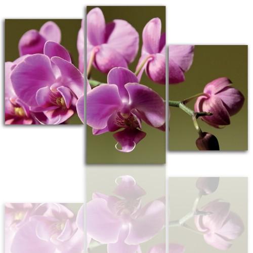 Tryptyk do salonu -  Kwiaty, storczyk, orchidea 12097 - 1